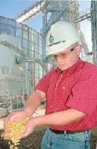 Ethanol production.